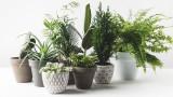 Как да предпазим домашните цветя от вредители