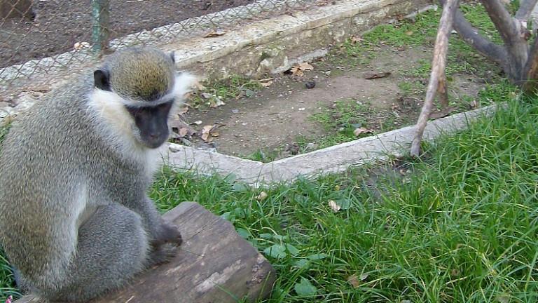 Зоопаркът в Айтос търси осиновители