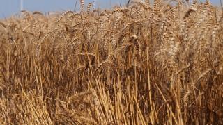 Проверяват дали непълнолетни прибират реколтата в Кърджалийско