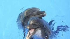 Само хората, делфините и шимпанзетата правят секс за кеф