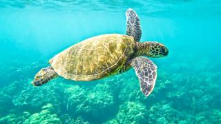 Костенурка плува с кокаин за 53 милиона долара