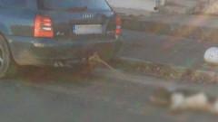 Разследват случая с влаченото куче в Бузовград