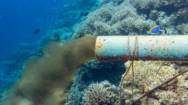 Мъртвите зони в океана, където липсва кислород, са увеличили размера