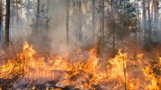 Голям пожар бушува на метри от село в Първомайско