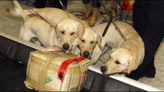 Клонирани кучета станаха митничари в Южна Корея