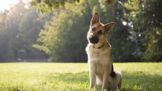 Полицейски кучета топ агенти са разкрили над 150 престъпления за година