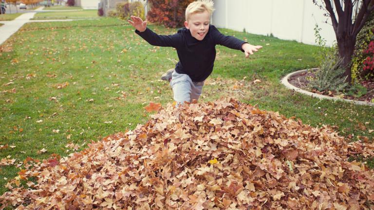 Защо не трябва да чистим падналите листа