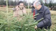 Купувайте живи елхички, призова земеделският министър
