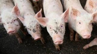 Свински грип и в Гърция?
