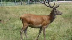 Задържаха 70 ловни трофея в Софийско за седмица