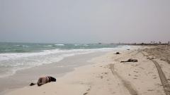 90 мигранти се удавиха до Либия?
