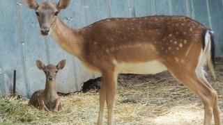 Родиха се две лопатарчета в разградския зоопарк