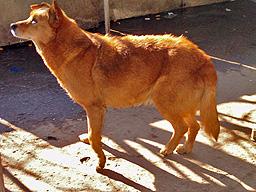 Глутница кучета нахапаха жена във Велико Търново