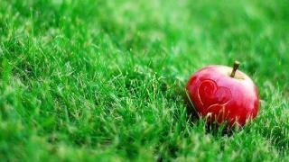 Ябълките - най-полезният плод?