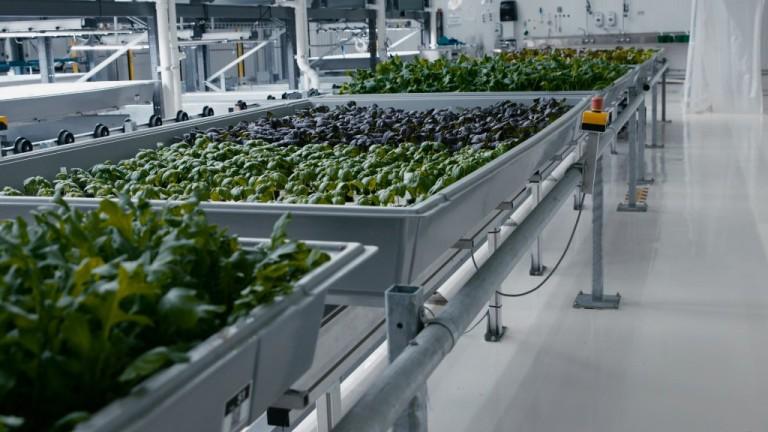 Фермерите разчитат на изкуствен интелект за по-добра реколта