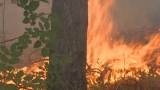 Пожарът край с. Каменар е овладян