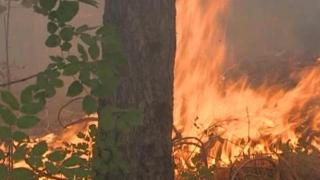 Вертолет на ВВС гаси пожара в Харманлийско