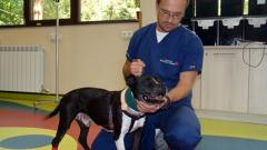 Наши ветеринари поставиха първия на Балканите пейсмекър на куче