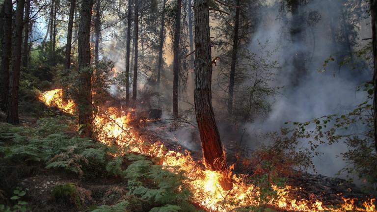 Има задържан за горските пожари в Турция