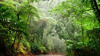 Климатични промени: човешката дейност кара горите да отделят въглерод