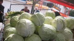 БАБХ спря вноса на 20 тона зеле и краставици с пестициди
