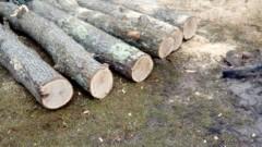 Горски съставиха над 70 акта за незаконна дървесина в Старозагорско и Сливенско