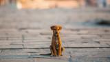 Коронавирусът, бездомните животни по света и кой се грижи за тях