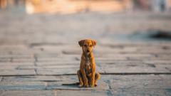 Бездомните животни по света по време на карантина