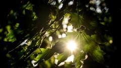 Дъжд и слънце се редуват