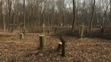Варненци се разтревожиха от поголовна санитарна сеч на дървета