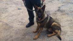 Полицейското куче Каро надуши група нелегални имигранти