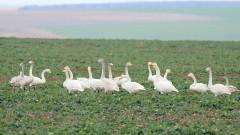 Нисък е рискът за заразяване на хората от нюкясълска болест по птиците