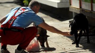 Информационна кампания за домашните и бездомните животни