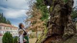 """""""Европейско дърво на годината"""", Ново село, вековният дъб и как да гласуваме в конкурса"""