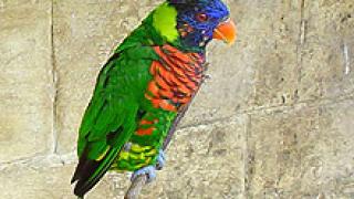 Хващат българи с  390 папагала на турската граница