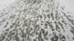 46 машини чистят снега в София