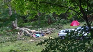 Бор падна върху палатка в къмпинг в Рилския манастир, жена загина