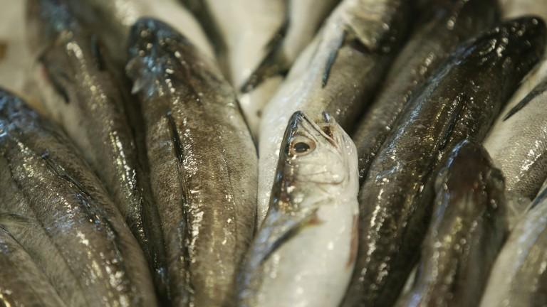 Инспектират везните за риба по повод Никулден