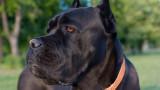 Сигнали за кучетата във Владо Тричков са подавани още през 2016 г.