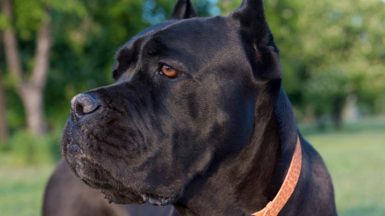 Кучетата убийци изгонени от Шумен, нападали хора: България и Македония се разбраха за античността