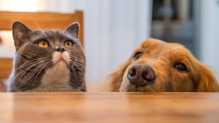 Кучета и котки могат да се заразят с коронавирус от хора