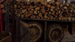 Над 9 000 кубика незаконна дървесина са задържани от началото на годината