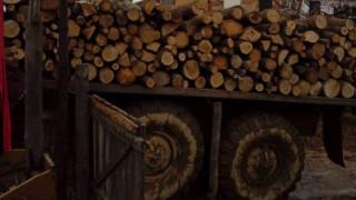 Горски инспектори хванаха два камиона с незаконни дърва в Софийско