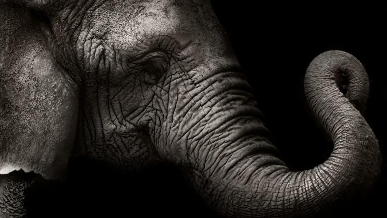 Слоновете са изумителни животни, няма две мнения по този въпрос.