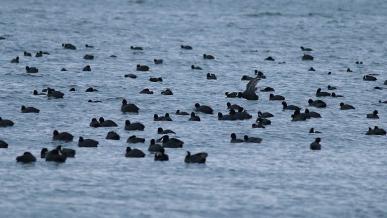 Алармират за мъртви птици по бургаския залив