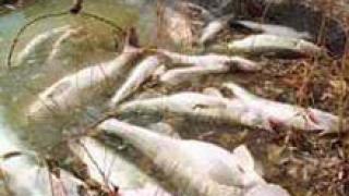 Източникът на замърсяване на река Стряма остава неизвестен