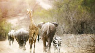 Братя по съдба – изчезващите видове