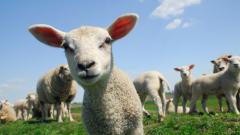 Дават 11 млн. лв. извънредна помощ на животновъдите