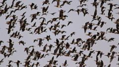 Изпращаме мигриращите птици
