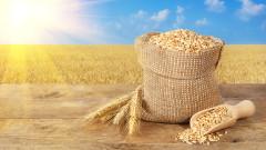 Русия се очертава като абсолютен лидер в износа на пшеница